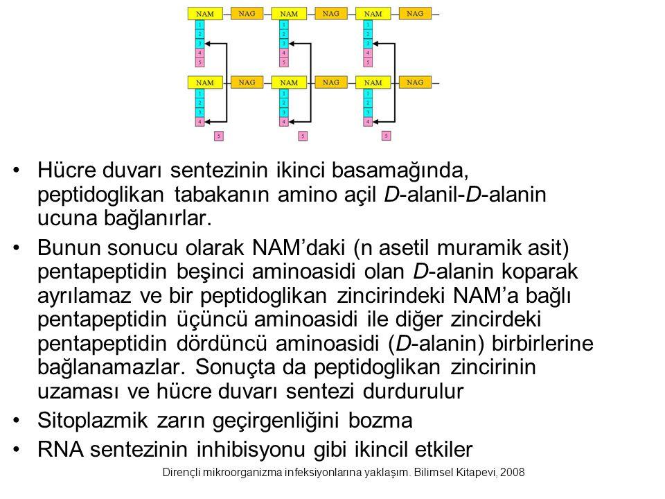 Hücre duvarı sentezinin ikinci basamağında, peptidoglikan tabakanın amino açil D-alanil-D-alanin ucuna bağlanırlar. Bunun sonucu olarak NAM'daki (n as