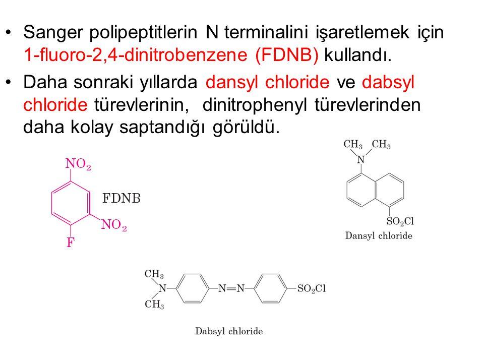 Sanger polipeptitlerin N terminalini işaretlemek için 1-fluoro-2,4-dinitrobenzene (FDNB) kullandı. Daha sonraki yıllarda dansyl chloride ve dabsyl chl