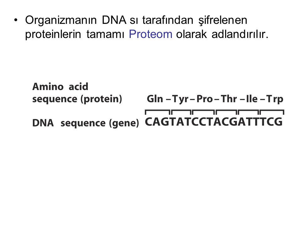 Organizmanın DNA sı tarafından şifrelenen proteinlerin tamamı Proteom olarak adlandırılır.