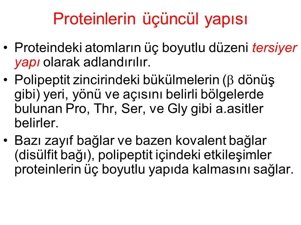Proteinlerin üçüncül yapısı Proteindeki atomların üç boyutlu düzeni tersiyer yapı olarak adlandırılır. Polipeptit zincirindeki bükülmelerin (  dönüş