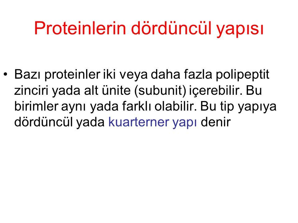 Proteinlerin dördüncül yapısı Bazı proteinler iki veya daha fazla polipeptit zinciri yada alt ünite (subunit) içerebilir. Bu birimler aynı yada farklı