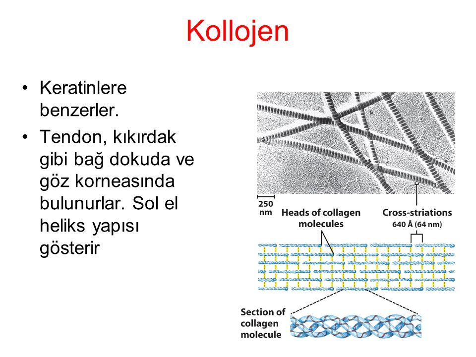 Kollojen Keratinlere benzerler. Tendon, kıkırdak gibi bağ dokuda ve göz korneasında bulunurlar. Sol el heliks yapısı gösterir
