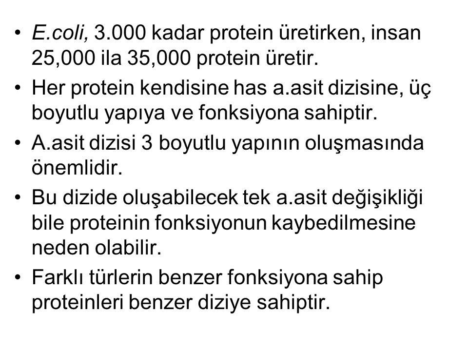 E.coli, 3.000 kadar protein üretirken, insan 25,000 ila 35,000 protein üretir. Her protein kendisine has a.asit dizisine, üç boyutlu yapıya ve fonksiy