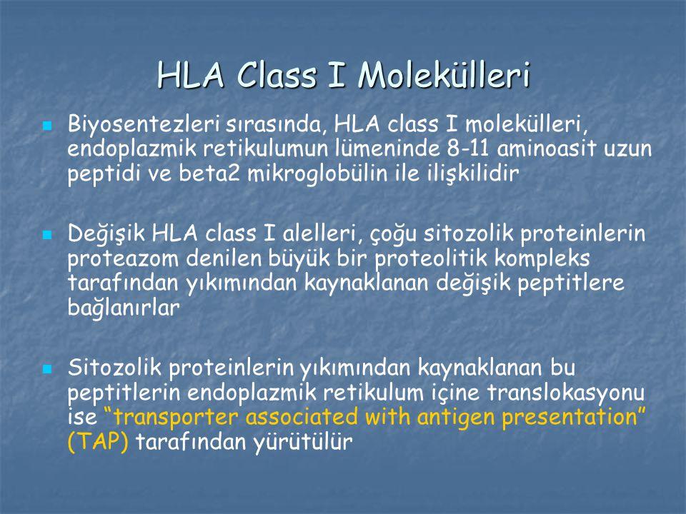 HLA Class I Molekülleri Biyosentezleri sırasında, HLA class I molekülleri, endoplazmik retikulumun lümeninde 8-11 aminoasit uzun peptidi ve beta2 mikr