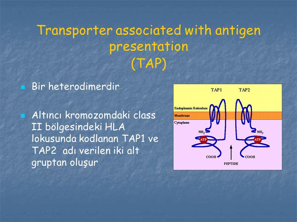 Transporter associated with antigen presentation (TAP) Bir heterodimerdir Altıncı kromozomdaki class II bölgesindeki HLA lokusunda kodlanan TAP1 ve TA