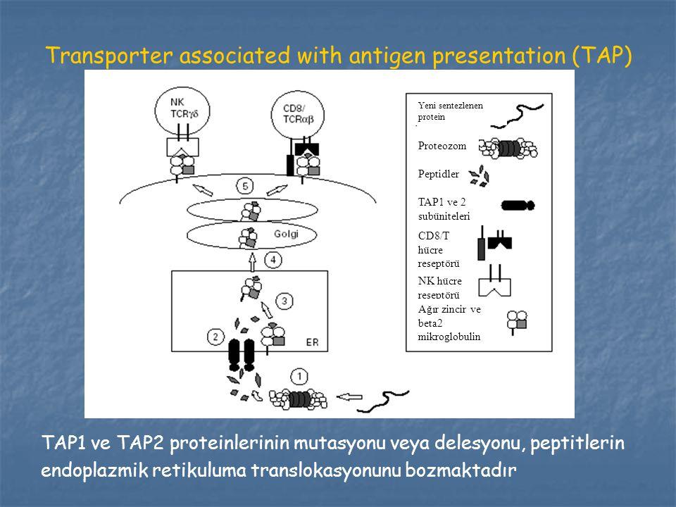 Transporter associated with antigen presentation (TAP) TAP1 ve TAP2 proteinlerinin mutasyonu veya delesyonu, peptitlerin endoplazmik retikuluma transl