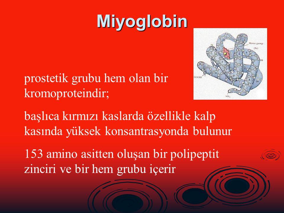 Miyoglobin prostetik grubu hem olan bir kromoproteindir; başlıca kırmızı kaslarda özellikle kalp kasında yüksek konsantrasyonda bulunur 153 amino asit