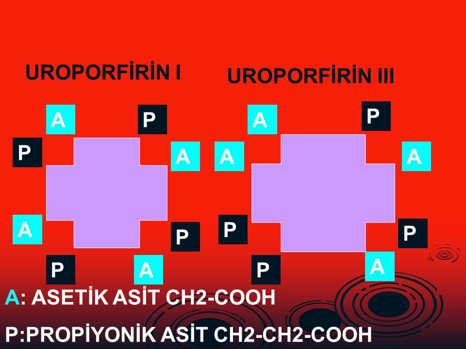 A P P A A A P P P A P P A A A P UROPORFİRİN I UROPORFİRİN III A: ASETİK ASİT CH2-COOH P:PROPİYONİK ASİT CH2-CH2-COOH