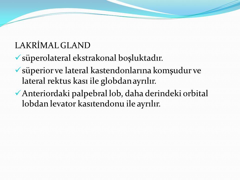 LAKRİMAL GLAND süperolateral ekstrakonal boşluktadır. süperior ve lateral kastendonlarına komşudur ve lateral rektus kası ile globdan ayrılır. Anterio