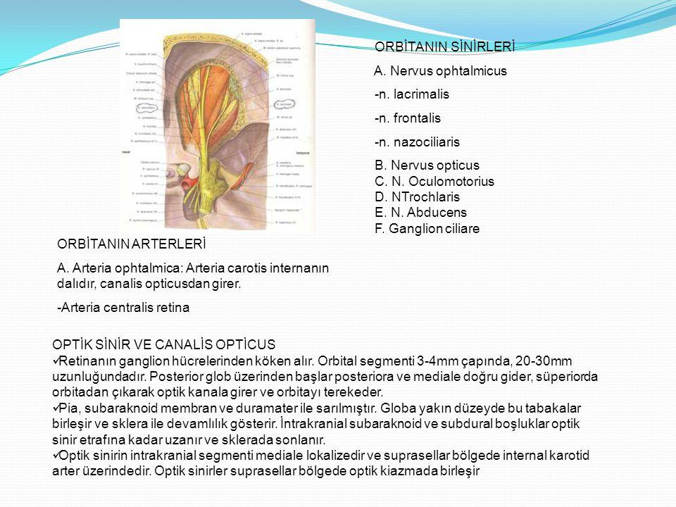 ORBİTANIN SİNİRLERİ A. Nervus ophtalmicus -n. lacrimalis -n. frontalis -n. nazociliaris B. Nervus opticus C. N. Oculomotorius D. NTrochlaris E. N. Abd