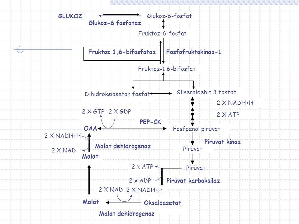 Pir ü vat Karboksilaz Pir ü vat karboksilaz KC ve b ö brek h ü cre mitokondrilerinde bulunur fakat kas h ü crelerinde bulunmaz.