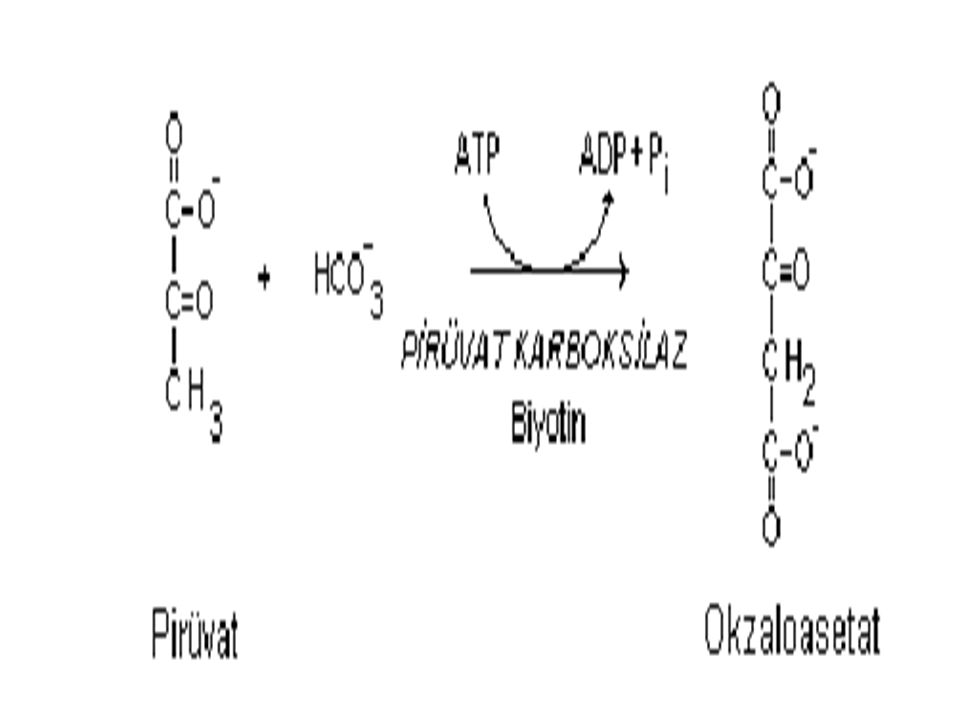 Laktat 1- Laktat, laktat dehidrogenaz la pir ü vata ç evrilir.