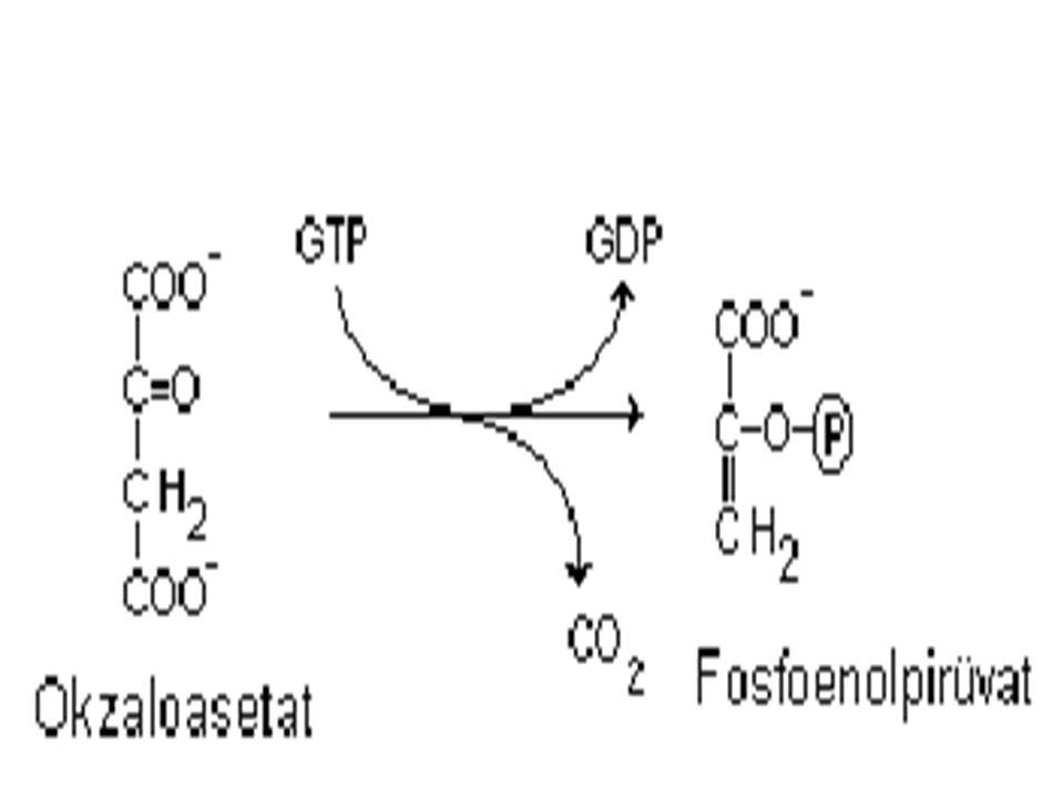 3- Sitoplazmaya ge ç en okzaloasetat, fosfoenolpir ü vat karboksikinaz ile dekarboksile olarak fosfoenolpir ü vat a ç evrilir.
