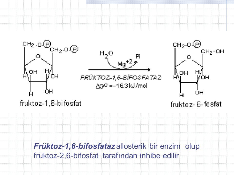 5- Fr ü ktoz- 1,6-bifosfat ı n fr ü ktoz-6- fosfata d ö n ü ş ü m ü farkl ı bir enzimle ger ç ekle ş tirilir.