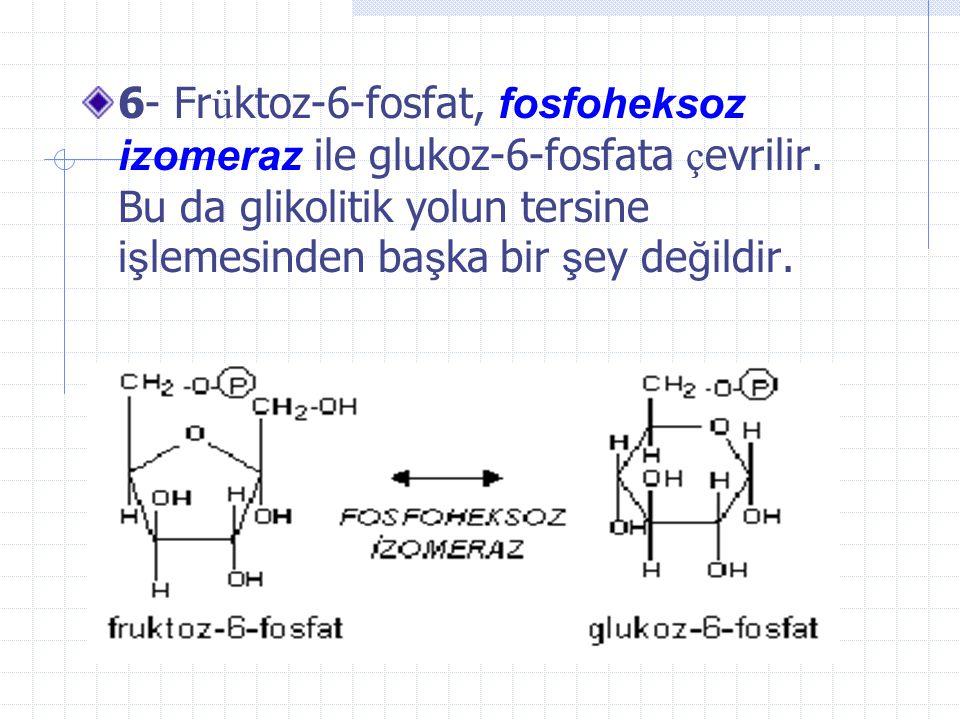 Früktoz-1,6-bifosfataz allosterik bir enzim olup früktoz-2,6-bifosfat tarafından inhibe edilir