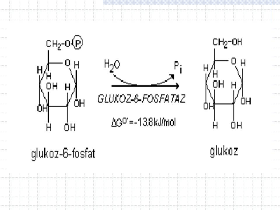 7- Glukoneojenez in glukoz eldesi ile sonu ç lanan son a ş amas ı nda glukoz-6-fosfat, glukoz-6-fosfataz taraf ı ndan glukoza par ç alan ı r.