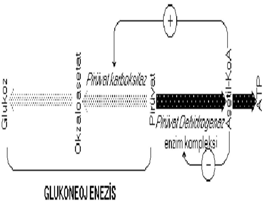 ATP-NADH-glukoneogenez Organizma yeterli ATP y ü k ü ne sahip olunca oksidatif fosforilasyon yavaşlar ve bu da NADH birikimine yol a ç ar.