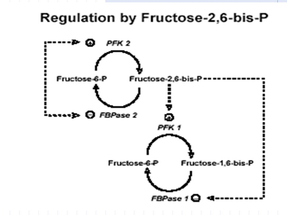fr ü ktoz-2,6-bisfosfat Bir di ğ er mod ü lat ö r fr ü ktoz-2,6-bisfosfat t ı r.