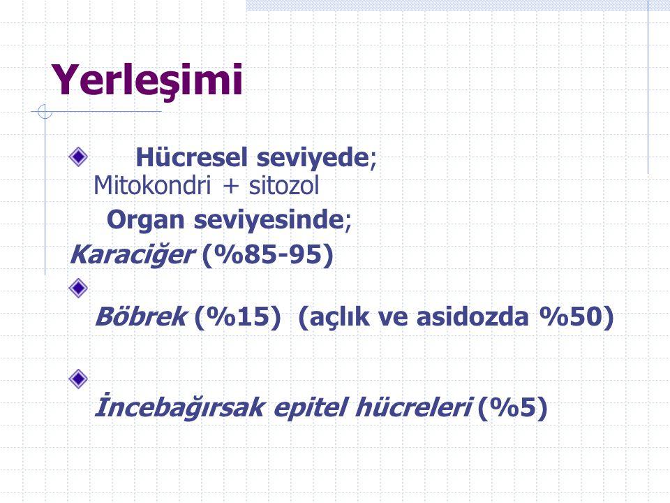 Yerleşimi Hücresel seviyede; Mitokondri + sitozol Organ seviyesinde; Karaciğer (%85-95) Böbrek (%15) (açlık ve asidozda %50) İncebağırsak epitel hücreleri (%5)
