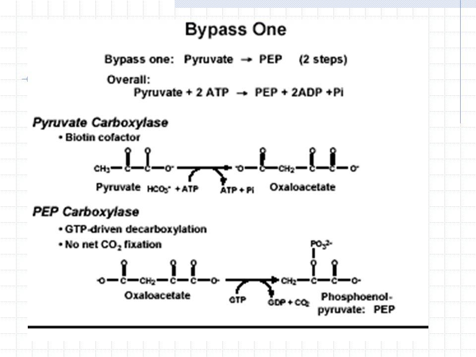 Ö rne ğ in asetil-KoA glukoneogenezin ilk enzimi olan pir ü vat karboksilazı allosterik olarak aktive ederken pir ü vat dehidrogenazı inhibe eder.