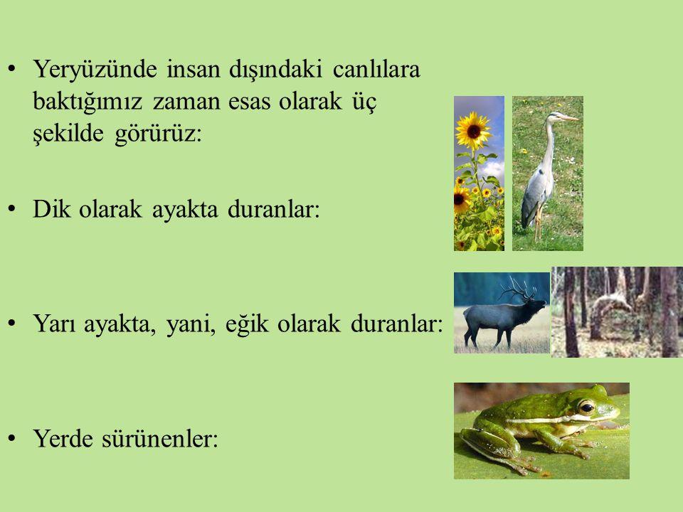 Yeryüzünde insan dışındaki canlılara baktığımız zaman esas olarak üç şekilde görürüz: Dik olarak ayakta duranlar: Yarı ayakta, yani, eğik olarak duran