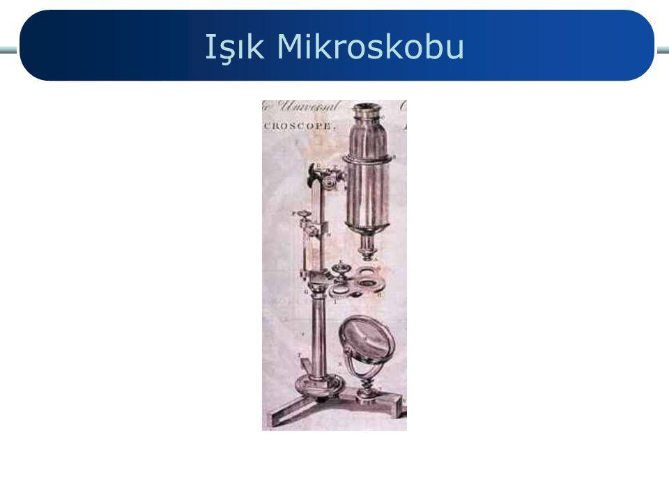 Işık Mikroskobu