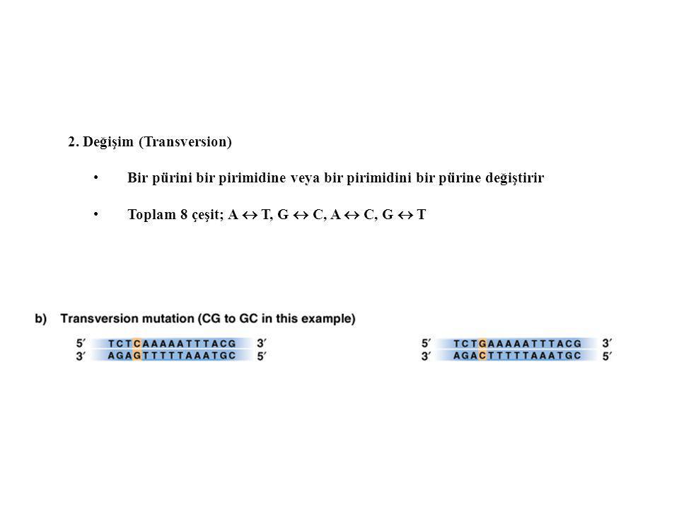2. Değişim (Transversion) Bir pürini bir pirimidine veya bir pirimidini bir pürine değiştirir Toplam 8 çeşit; A  T, G  C, A  C, G  T