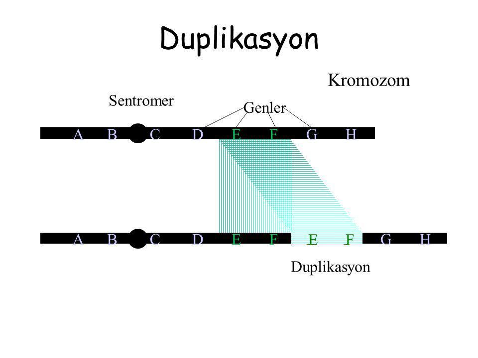 Duplikasyon A B C D E F E F G H Kromozom Sentromer A B C D E F G H Genler E F Duplikasyon