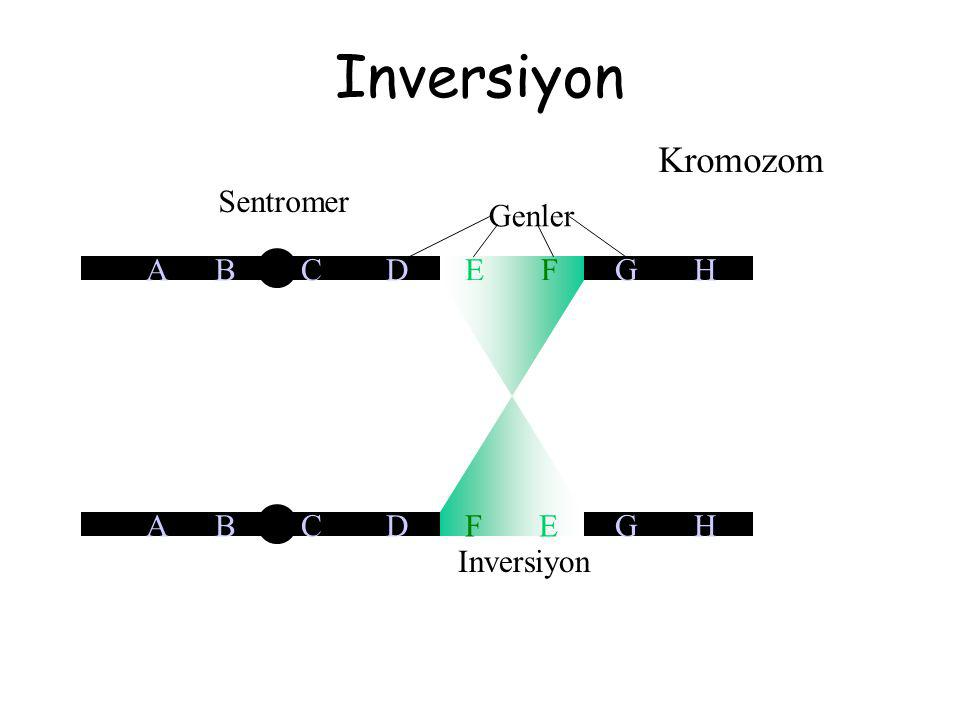 Inversiyon Kromozom Sentromer A B C D F E G H Genler A B C D E F G H Inversiyon