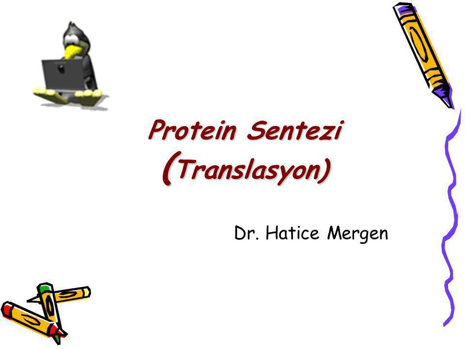 Protein Sentezi ( Translasyon) Dr. Hatice Mergen
