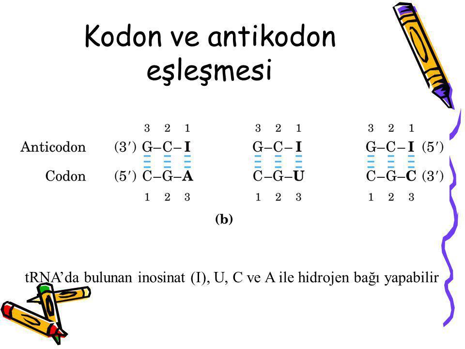 tRNA'da bulunan inosinat (I), U, C ve A ile hidrojen bağı yapabilir Kodon ve antikodon eşleşmesi