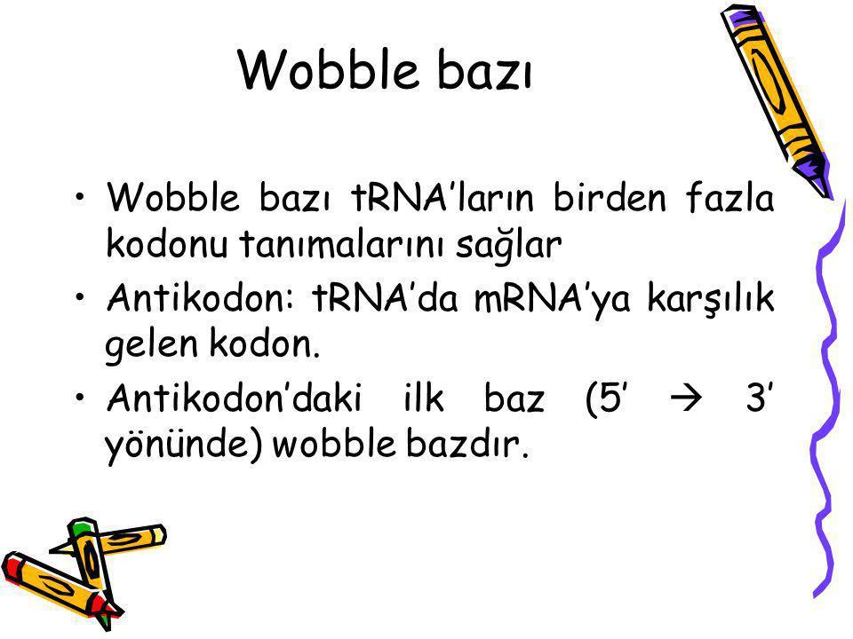 Wobble bazı Wobble bazı tRNA'ların birden fazla kodonu tanımalarını sağlar Antikodon: tRNA'da mRNA'ya karşılık gelen kodon. Antikodon'daki ilk baz (5′