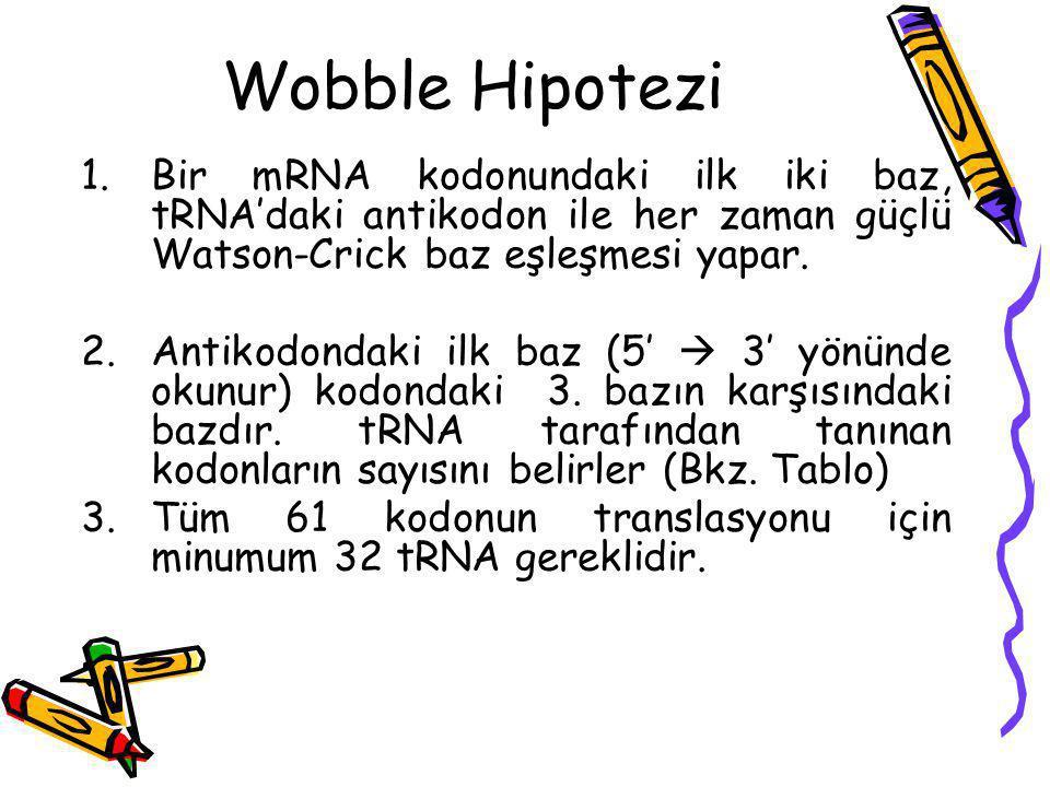 Wobble Hipotezi 1.Bir mRNA kodonundaki ilk iki baz, tRNA'daki antikodon ile her zaman güçlü Watson-Crick baz eşleşmesi yapar. 2.Antikodondaki ilk baz
