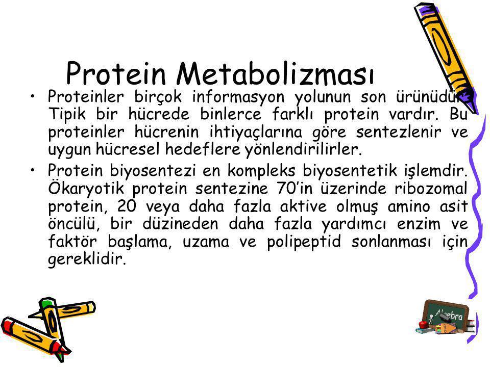 Protein Metabolizması Proteinler birçok informasyon yolunun son ürünüdür. Tipik bir hücrede binlerce farklı protein vardır. Bu proteinler hücrenin iht