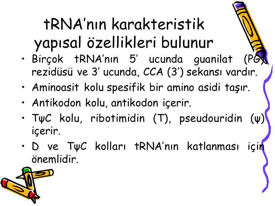 tRNA'nın karakteristik yapısal özellikleri bulunur Birçok tRNA'nın 5′ ucunda guanilat (PG) rezidüsü ve 3′ ucunda, CCA (3′) sekansı vardır. Aminoasit k