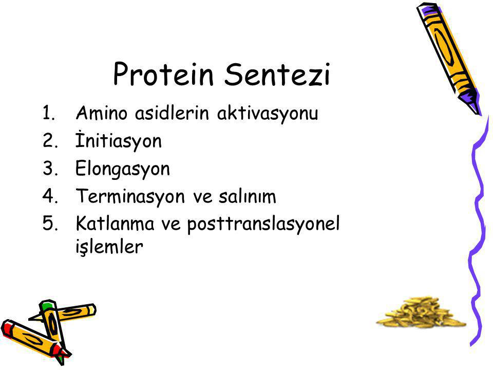 Protein Sentezi 1.Amino asidlerin aktivasyonu 2.İnitiasyon 3.Elongasyon 4.Terminasyon ve salınım 5.Katlanma ve posttranslasyonel işlemler