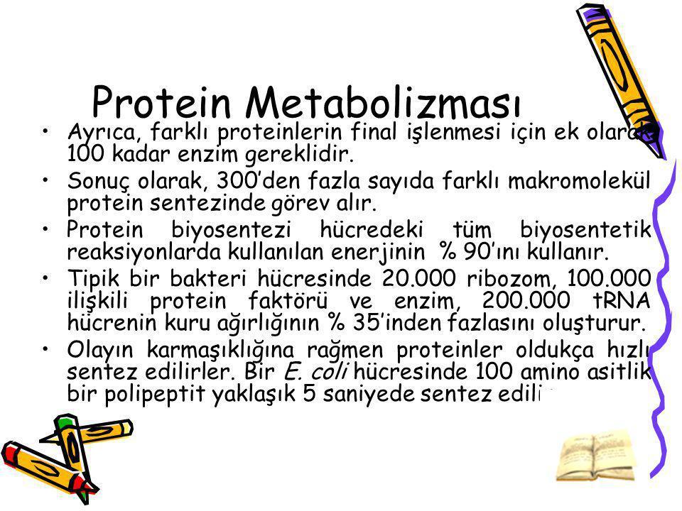Protein Metabolizması Ayrıca, farklı proteinlerin final işlenmesi için ek olarak 100 kadar enzim gereklidir. Sonuç olarak, 300'den fazla sayıda farklı
