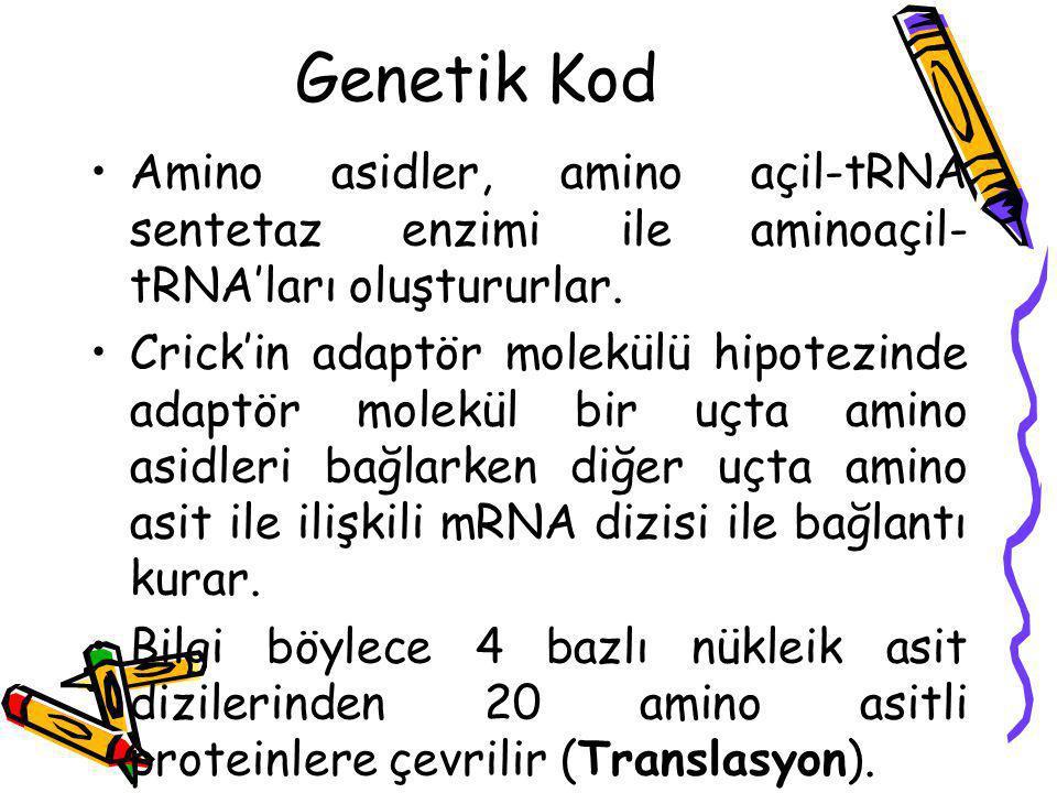 Crick'in adaptör hipotezi Amino asidler kovalent olarak tRNA'nın 3′ ucuna bağlanır.