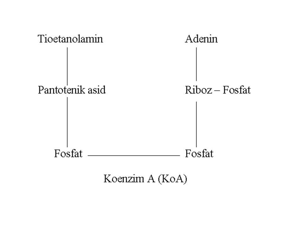 Biokimyasal Etkisi Pantotenik asidin önemi KoA yapısına girmesidir.