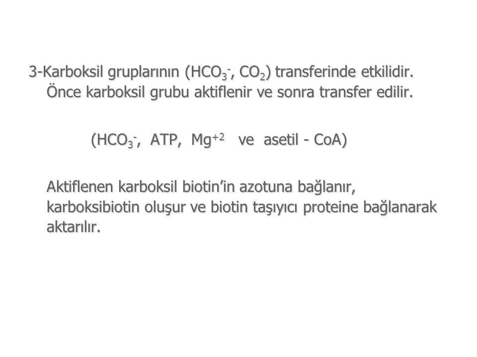 3-Karboksil gruplarının (HCO 3 -, CO 2 ) transferinde etkilidir.