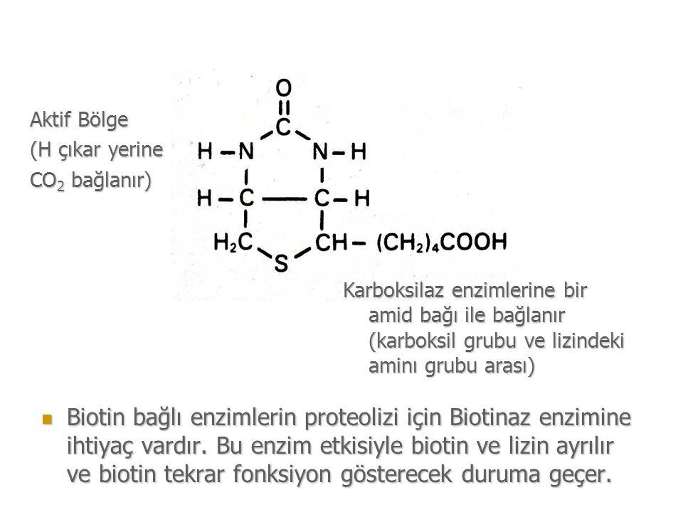 Biotin bağlı enzimlerin proteolizi için Biotinaz enzimine ihtiyaç vardır.