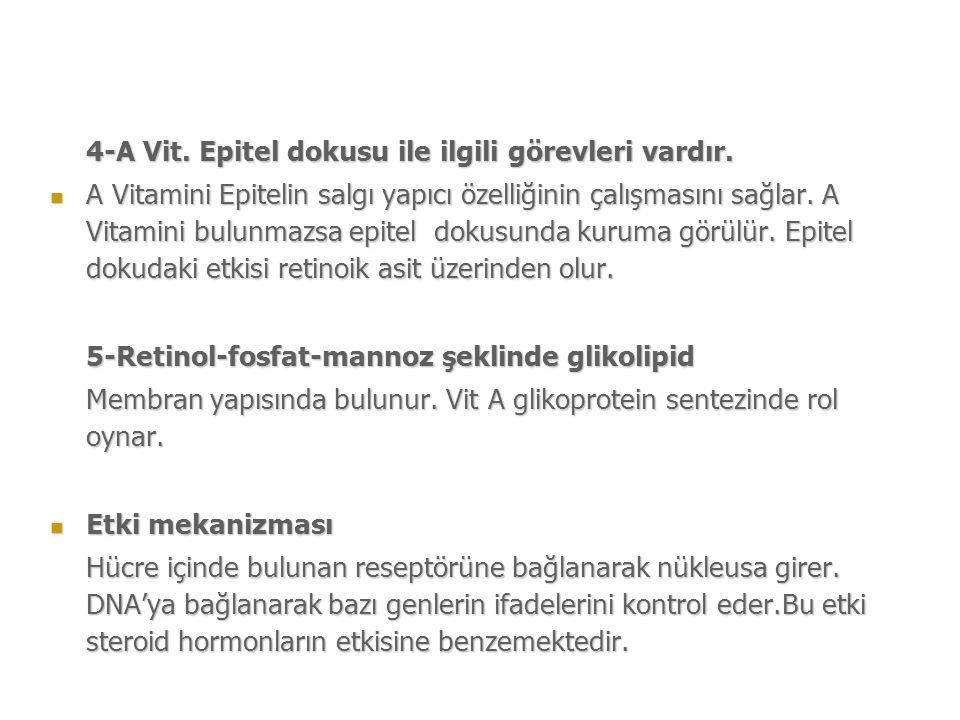 4-A Vit.Epitel dokusu ile ilgili görevleri vardır.