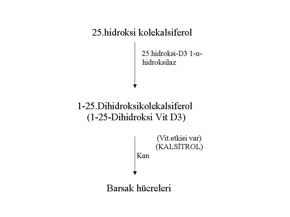Bu olayda regulasyon 1-Paratiroid hormon 2-Serum fosfat miktarı 3-1-25.
