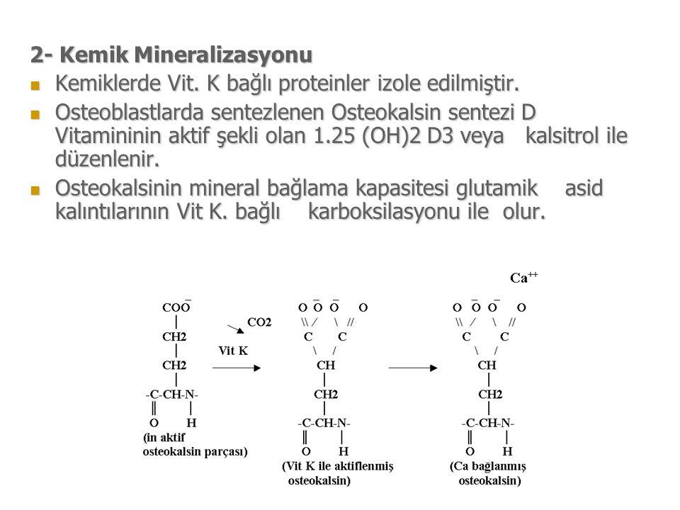 2- Kemik Mineralizasyonu Kemiklerde Vit.K bağlı proteinler izole edilmiştir.