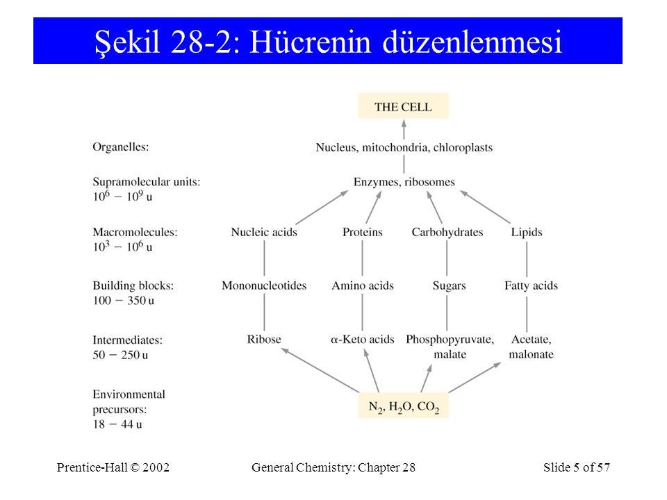 Prentice-Hall © 2002General Chemistry: Chapter 28Slide 5 of 57 Şekil 28-2: Hücrenin düzenlenmesi