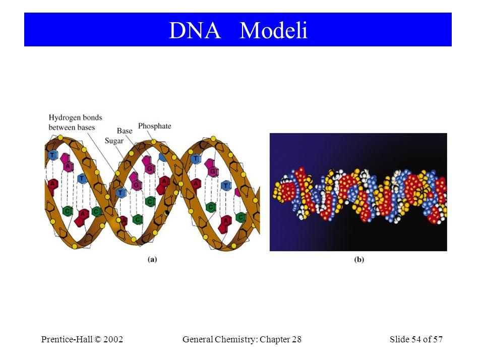 Prentice-Hall © 2002General Chemistry: Chapter 28Slide 54 of 57 DNA Modeli