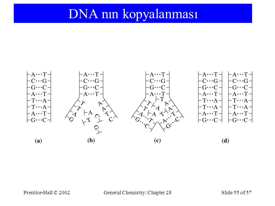 Prentice-Hall © 2002General Chemistry: Chapter 28Slide 55 of 57 DNA nın kopyalanması