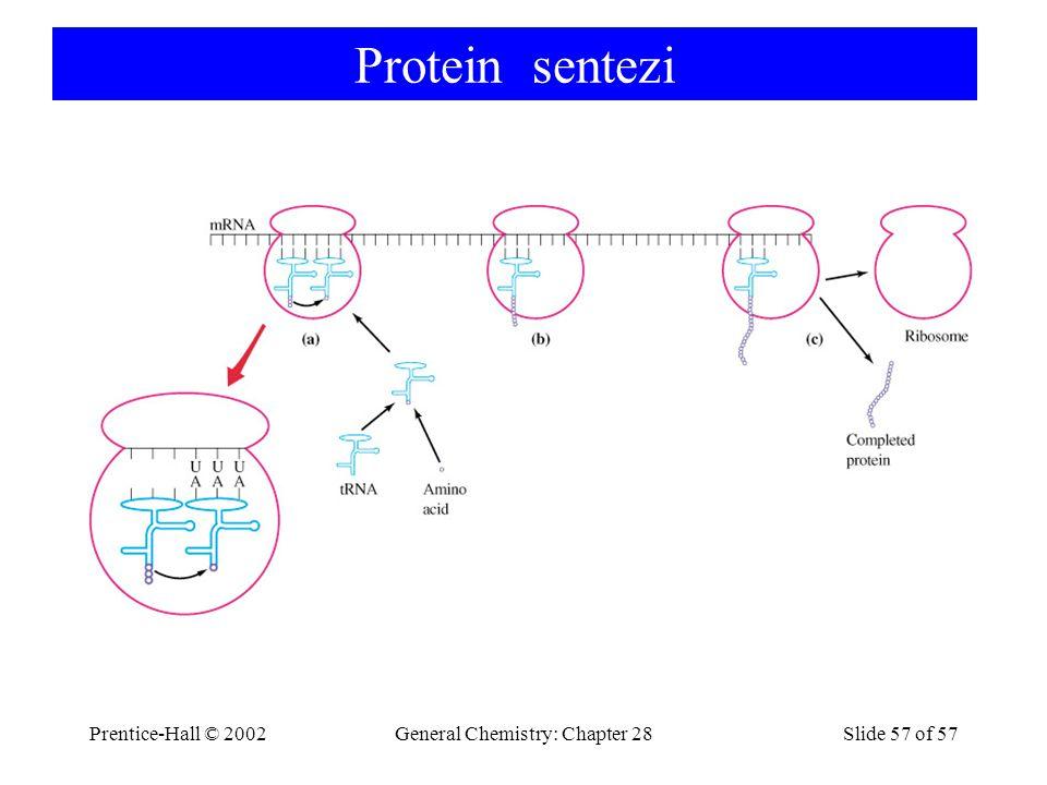 Prentice-Hall © 2002General Chemistry: Chapter 28Slide 57 of 57 Protein sentezi