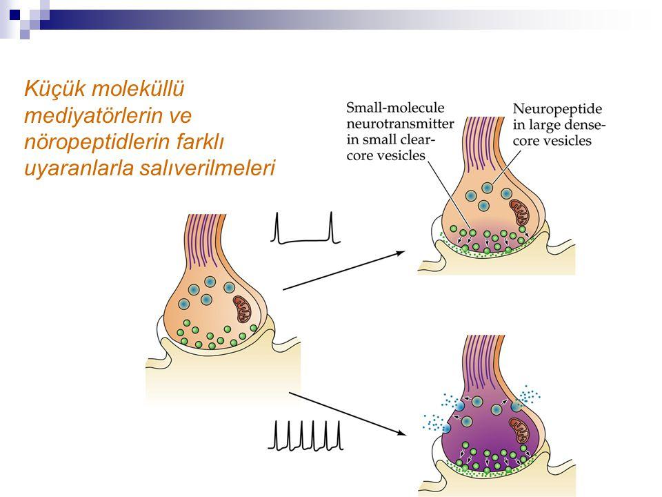 Küçük moleküllü mediyatörlerin ve nöropeptidlerin farklı uyaranlarla salıverilmeleri
