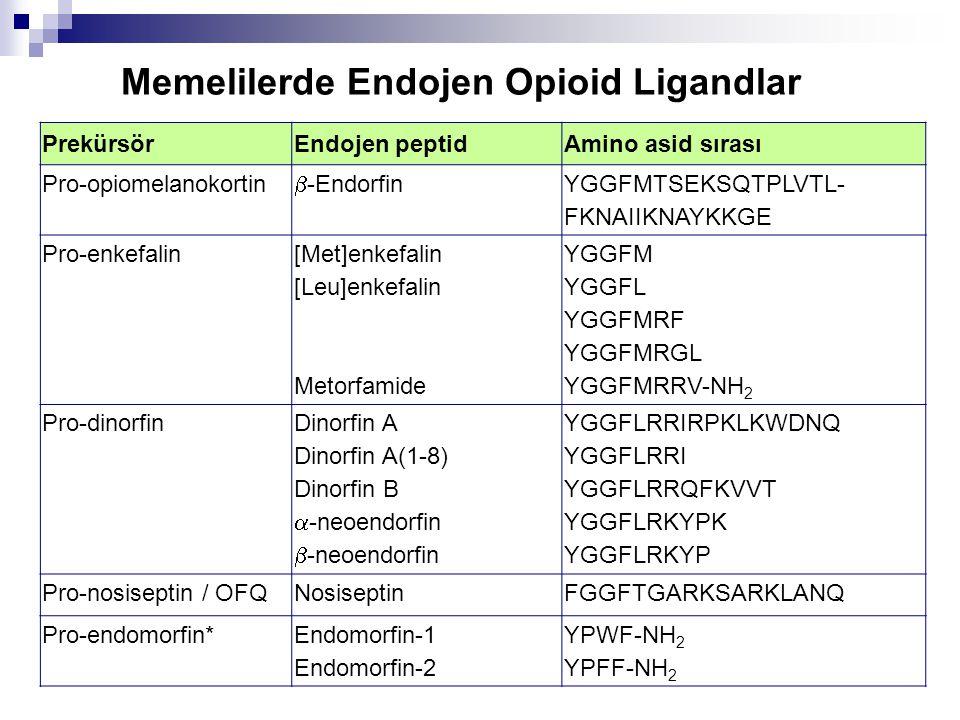 PrekürsörEndojen peptidAmino asid sırası Pro-opiomelanokortin  -Endorfin YGGFMTSEKSQTPLVTL- FKNAIIKNAYKKGE Pro-enkefalin [Met]enkefalin [Leu]enkefalin Metorfamide YGGFM YGGFL YGGFMRF YGGFMRGL YGGFMRRV-NH 2 Pro-dinorfin Dinorfin A Dinorfin A(1-8) Dinorfin B  -neoendorfin  -neoendorfin YGGFLRRIRPKLKWDNQ YGGFLRRI YGGFLRRQFKVVT YGGFLRKYPK YGGFLRKYP Pro-nosiseptin / OFQNosiseptinFGGFTGARKSARKLANQ Pro-endomorfin*Endomorfin-1 Endomorfin-2 YPWF-NH 2 YPFF-NH 2 Memelilerde Endojen Opioid Ligandlar